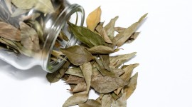Bay Leaf Wallpaper High Definition