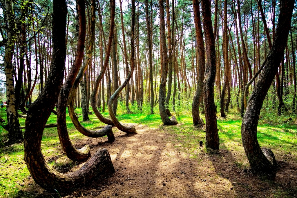 Bent Forest In Poland wallpapers HD