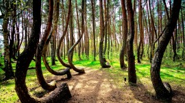Bent Forest In Poland Best Wallpaper