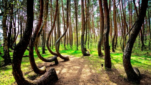 Bent Forest In Poland wallpapers high quality