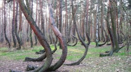 Bent Forest In Poland Photo#3