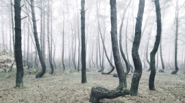 Bent Forest In Poland Pics