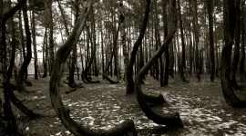 Bent Forest In Poland Wallpaper 1080p