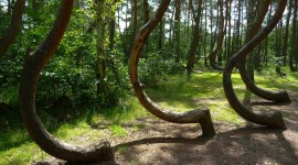 Bent Forest In Poland Wallpaper For IPhone