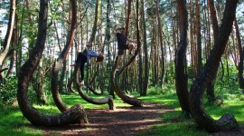 Bent Forest In Poland Wallpaper Gallery