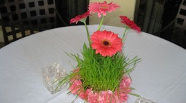 Daisies On The Table Photo