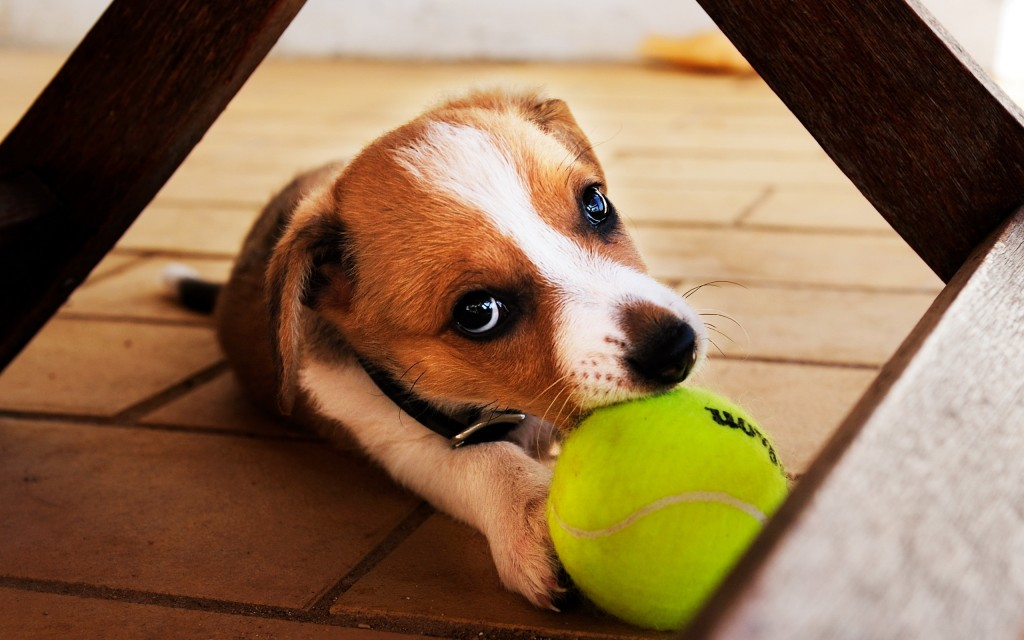 Dog And Ball wallpapers HD