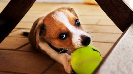 Dog And Ball Best Wallpaper
