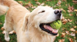 Dog And Ball Photo