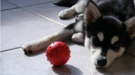 Dog And Ball Photo Download