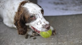 Dog And Ball Photo#1