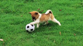 Dog And Ball Wallpaper