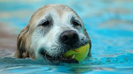 Dog And Ball Wallpaper Download