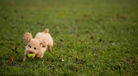 Dog And Ball Wallpaper Download Free