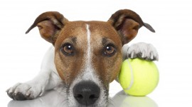Dog And Ball Wallpaper For PC
