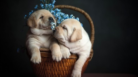 Dogs In Basket wallpapers high quality