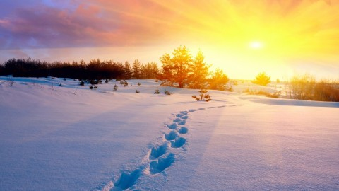 Footprints In The Snow wallpapers high quality