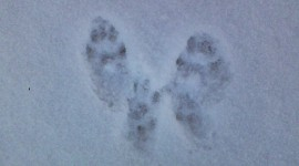 Footprints In The Snow Desktop Wallpaper