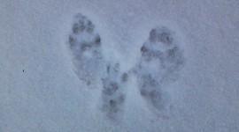 Footprints In The Snow Desktop Wallpaper