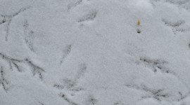 Footprints In The Snow Photo#1