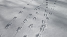 Footprints In The Snow Photo#2