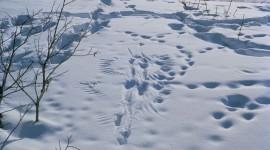 Footprints In The Snow Wallpaper Full HD