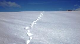 Footprints In The Snow Wallpaper Gallery