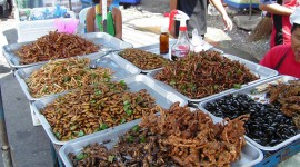 Fried Insects Best Wallpaper