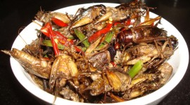 Fried Insects Wallpaper