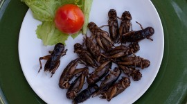 Fried Insects Wallpaper Download
