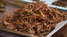 Fried Insects Wallpaper Download Free