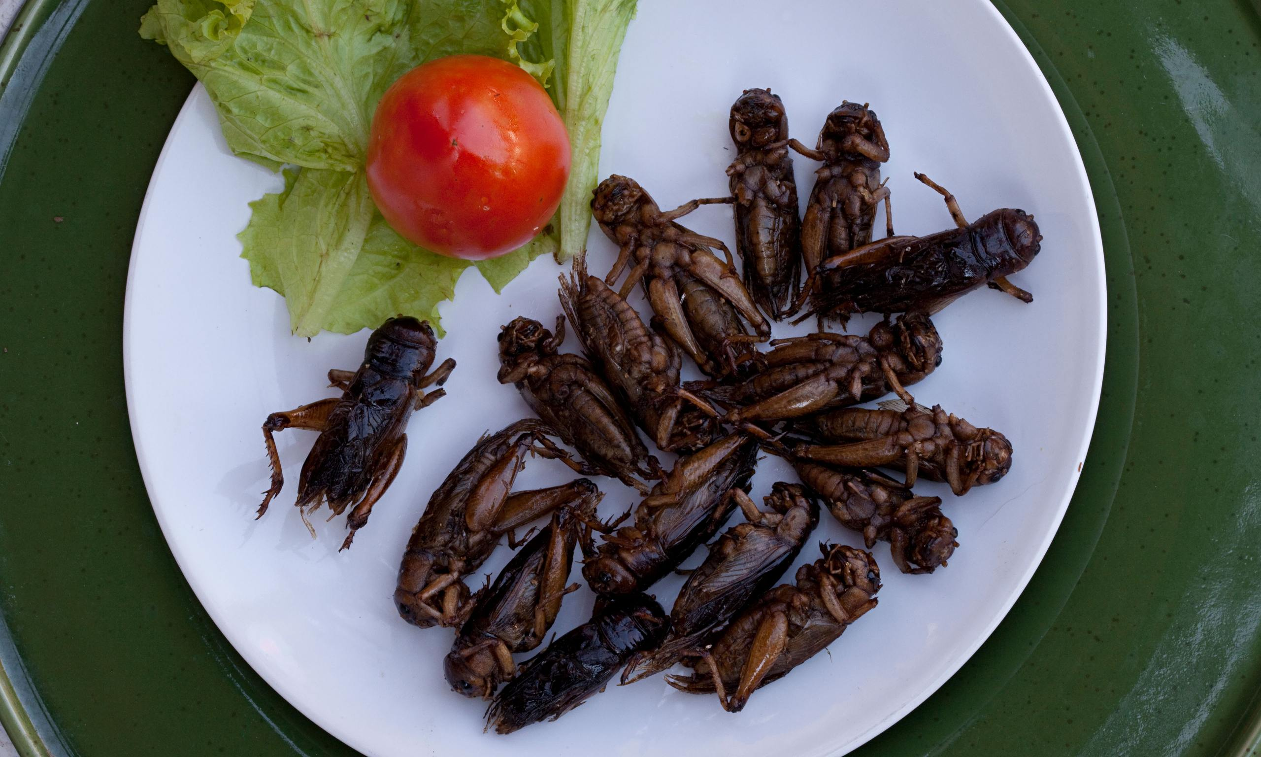 a critique of why not eat insects a speech by marcel dicke Gadd's classroom.