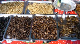 Fried Insects Wallpaper Free