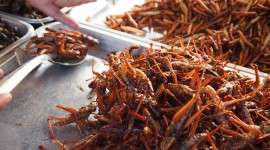 Fried Insects Wallpaper Gallery