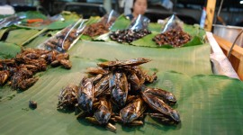 Fried Insects Wallpaper HQ