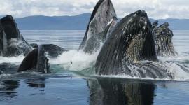 Humpback Whale Pics