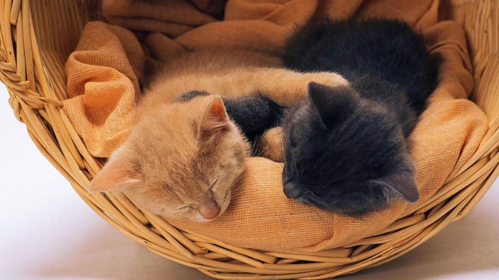 Kittens In Basket wallpapers HD
