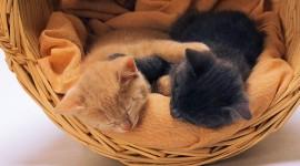 Kittens In Basket Best Wallpaper