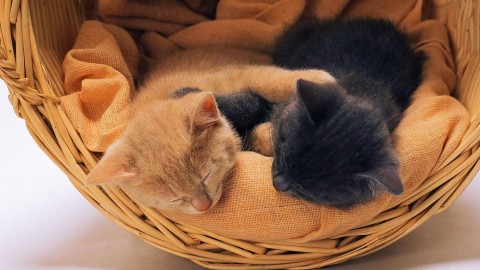 Kittens In Basket wallpapers high quality