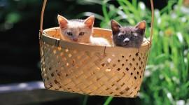 Kittens In Basket Desktop Wallpaper