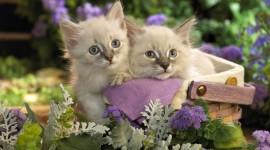 Kittens In Basket Desktop Wallpaper HD