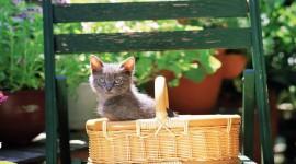 Kittens In Basket Photo