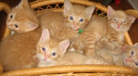 Kittens In Basket Photo Download