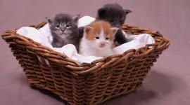 Kittens In Basket Wallpaper 1080p