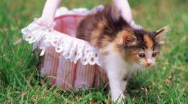 Kittens In Basket Wallpaper