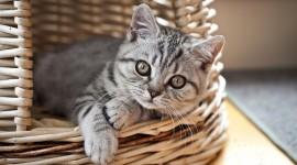 Kittens In Basket Wallpaper For Desktop