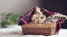Kittens In Basket Wallpaper For PC