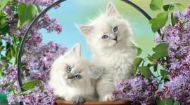 Kittens In Basket Wallpaper Gallery