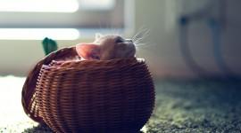 Kittens In Basket Wallpaper HQ