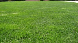 Lawn Photo Download